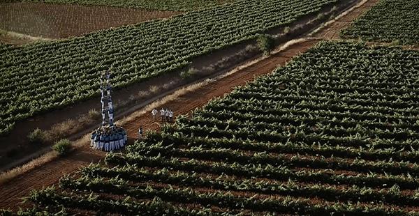 Verds entre vinyes